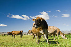 World's largest cow manure biogas project to begin production this year