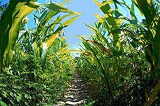 Innovative technology for bioethylene production